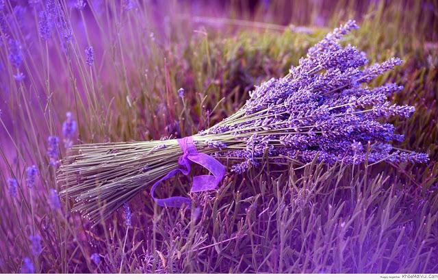 Tại sao nên chọn hoa Lavender làm quà tặng 8/3?