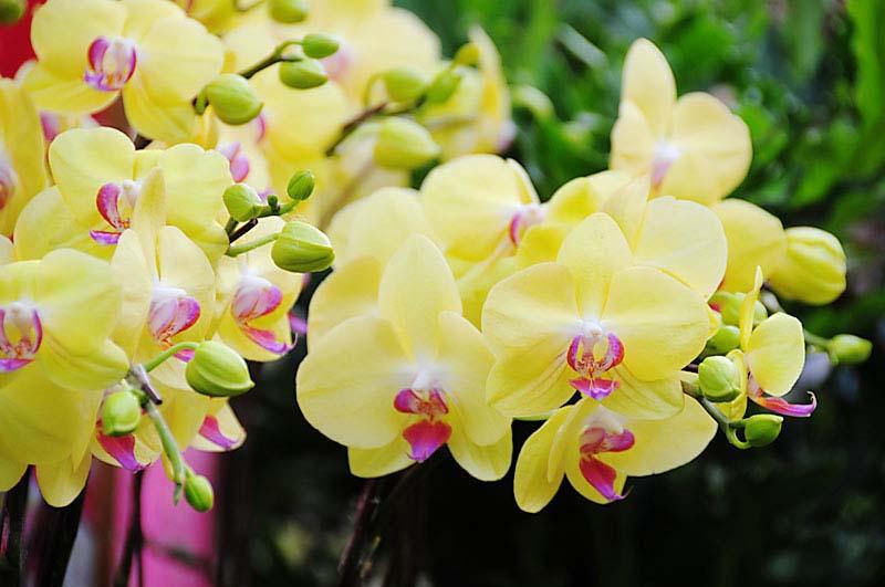 Lan hồ điệp - Vẻ đẹp tinh tế , cách chăm sóc loài hoa này